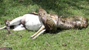 عکس هایی جالب از حیوانات