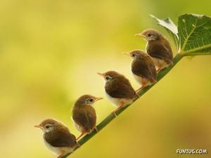 والپیپرهای زیبا از پرندگان