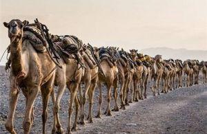 تصاویر مسابقه عکاسی سونی
