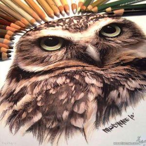 نقاشیهای حیرت انگیز وخلاقانه با مدادرنگی