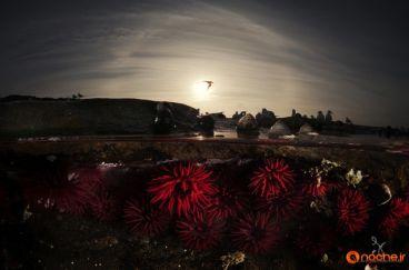 تصاویر زیبا از دنیاهای موازی در دو سوی امواج اقیانوس