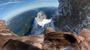 پرواز عقاب بر روی کوههای آلپ بسیار زیبا و دیدنی