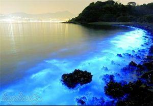 درخشانترین و عجیبترین ساحل دنیا