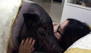 رابطه عاشقانه دختر با یک خوک!!