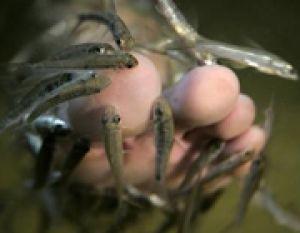 درباره ماهیدرمانی چه می دانید؟