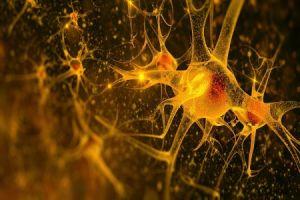ایمپلنتهای مغزی، تحولی شگرف برای ارتباط ذهن با دنیای بیرون