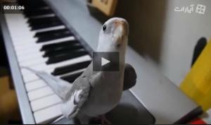آواز خواندن جالب یك پرنده زیبا