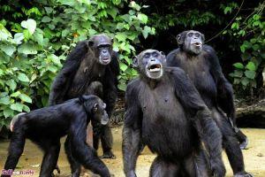جزیرهی میمونها