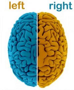 طالع بینی نیم کره های مغز