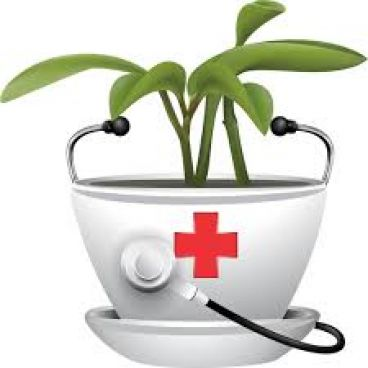 ۱۱ مسکن گیاهی در طب سنتی
