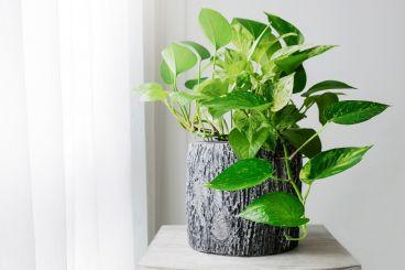 نکات نگهداری از گل و گیاه آپارتمانی