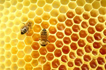 روشهایی برای تشخیص عسل طبیعی